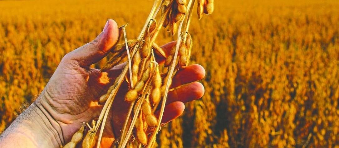 Produtores de soja devem aumentar a área de plantio em 4%