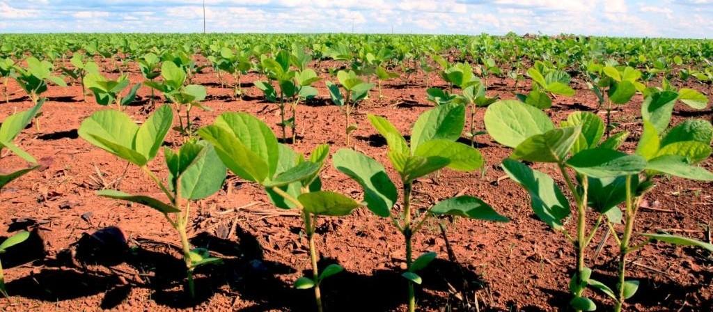 Paraná terá tempo seco para início de plantio da soja