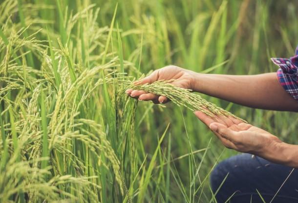 Ministério da Agricultura divulga Plano Agrícola e Pecuário 2019/20