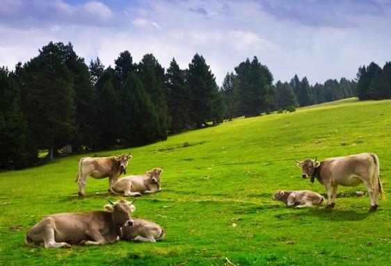 Mercado do boi gordo está ruim para compradores e vendedores