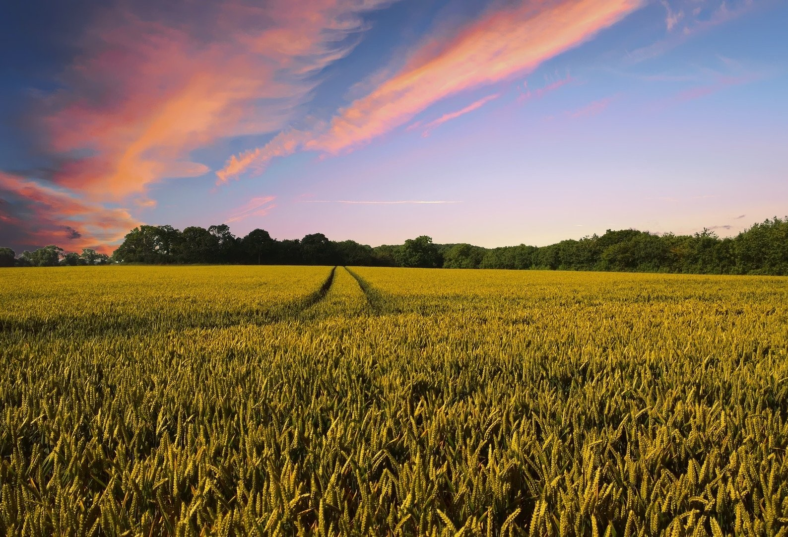Produtores brasileiros de grãos avançam na colheita